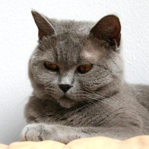 Großes Blutbild Katze Kosten 2021